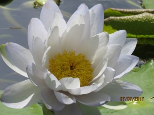 International Water Lily Garden