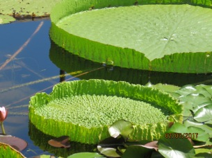 International Water Lily Garden